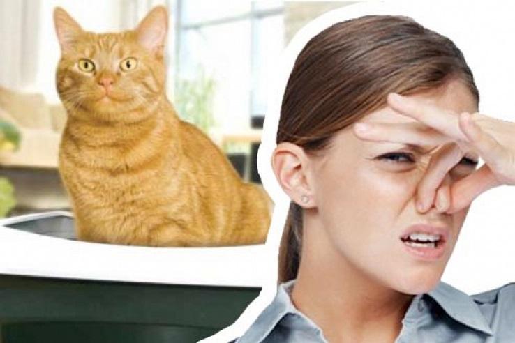 Запах мочи домашних животных в Брянске