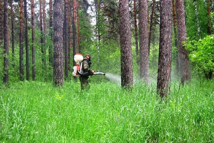 Обработка от клещей лесных массивов в Брянске